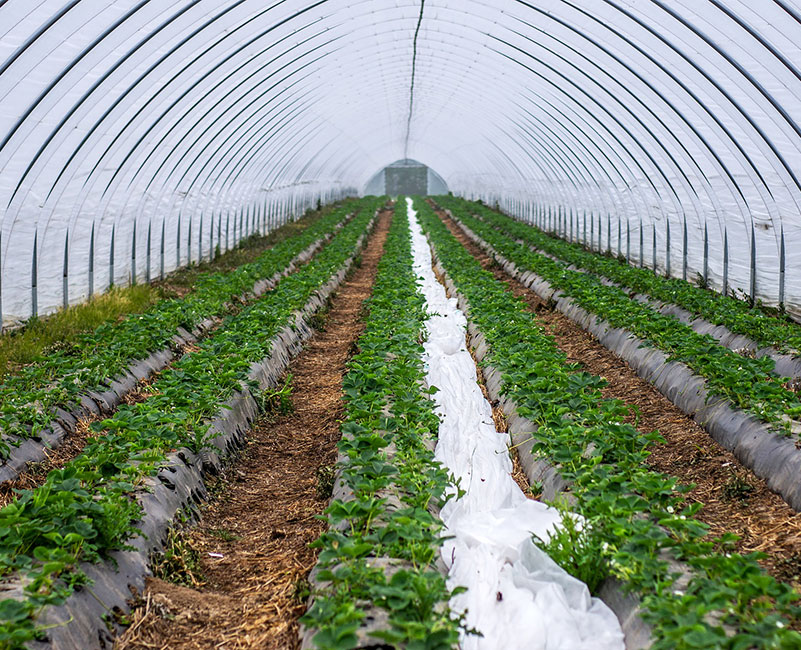 Agricultural Stormwater Services